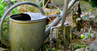 Garten umgraben – die Vorteile und Nachteile