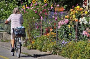 Den Gartenumbau preiswert und effizient planen